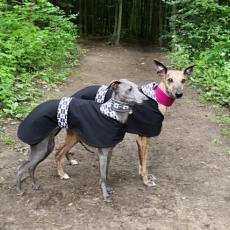 Softshellový kabátek Black & White 40 cm